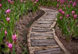 wooden-path-500x344